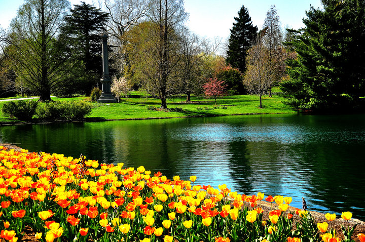 Spring in full bloom with a calming pond